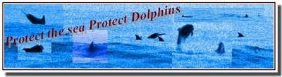 Protect The Sea Protect Dolphins